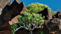 AIDA Kanarische Inseln  ab Gran Canaria & Teneriffa