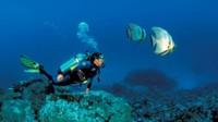 AIDA Karibik Special zum Sonderpreis mit Flug