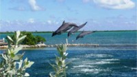JUST AIDA Karibik & Mittelamerika Kreuzfahrt